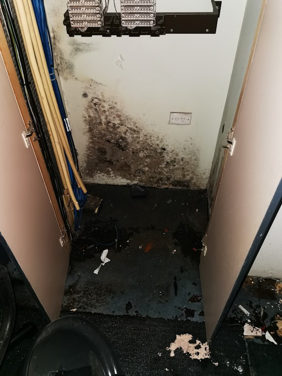 Mould infestation on office walls